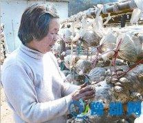 河南确山县:香菇种植成为山民新的增收点(图)