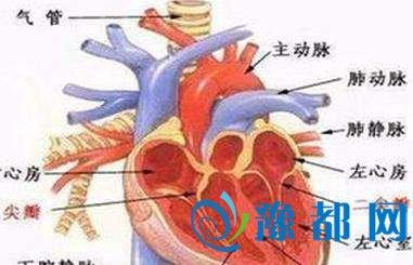 男童心脏动脉长反