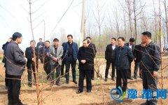 县人大视察林业工作(图)