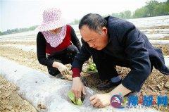 烟叶种植新技术助烟农增产增收