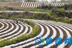 罗山县楠杆镇引导农民创效益