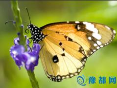 破茧成蝶:毛毛虫是怎样变成蝴蝶的