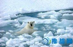 北极今年平均气温升1.3摄氏度 创百年最高纪录