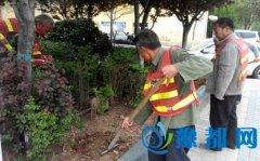 区住建局市政管理办公室对彩虹游园及区管道路补栽绿化树