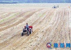 古塔街道办事处村民趁天抢种玉米