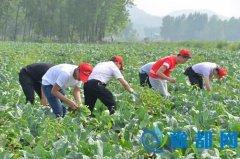 信阳学院伸援手帮助村民缓解售菜难