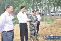 县长赵峰深入十字路乡调研指导三夏生产及人居环境整治工作