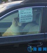 车主独留狗在车里留条吁勿破窗救狗:它在听歌呢
