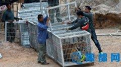 泰国一寺庙养137只老虎引争议 政府动手强迁