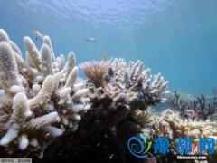 """海底的粉色""""星空"""":日本海域迎珊瑚产卵季"""