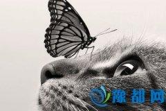 哪类宠物治愈你的心