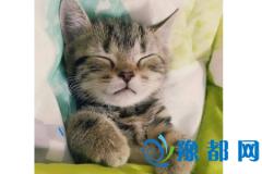 如果你是猫的话会是什么品种