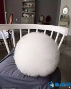 你绝对想不到,这个白毛球竟然是只…… 萌爆了啊!