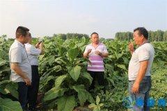 漯河市农科院专家到商桥镇后甄村开展农技培训