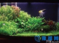 水草缸品牌推荐 水草缸在居家的作用