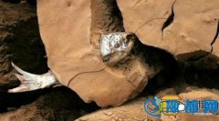 太神奇!这条鱼被人吸干扔掉 在土里卡了4年居然没死!