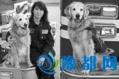 美国最后1只9・11搜救犬死亡 曾每天工作12小时