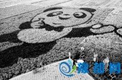 河南确山县:稻田艺术带热乡村游