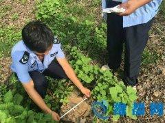 桐柏县林业执法人员冒酷暑 坚守执法第一线打击毁林犯罪行为