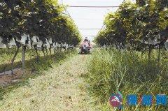 生态种植提高果品质量