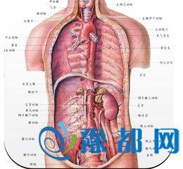 人体解剖图五脏六腑高清图片