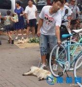 天津一男子为吃狗肉街上活活摔死小狗 遭群众暴打