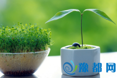 办公室绿色植物摆放有什么讲究