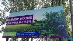 磙子营乡平庄村:蓝莓产业成致富产业