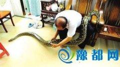老人收养120斤蟒蛇7年当宠物 家人与蛇和谐相处