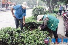 市园林处对市区绿化带进行苗木补栽