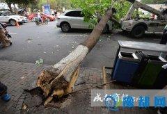 路边大树倒地砸中保时捷 车主:刚买才5天