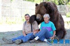 """美国夫妇收养十一个""""熊孩子"""" 与巨大棕熊嬉戏其乐融融"""