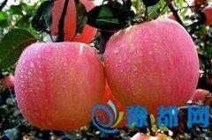 减肥效果排行榜 哪一种水果稳居第一