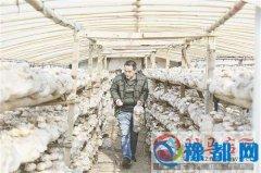 发展香菇种植带动农民增收