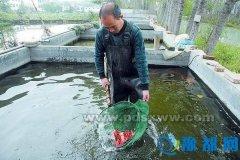 曹西村小金鱼游进全国市场