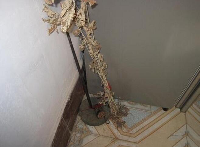 屋里角落里的铜盘称和艾草,是新郎和新娘拜堂时用的。