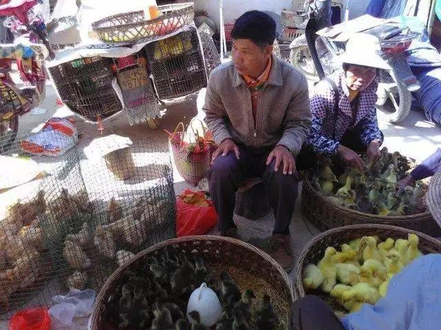 卖小鸡小鸭的地方。