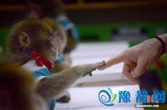 日本团队培育无免疫力猴子 有望解开自闭症难题