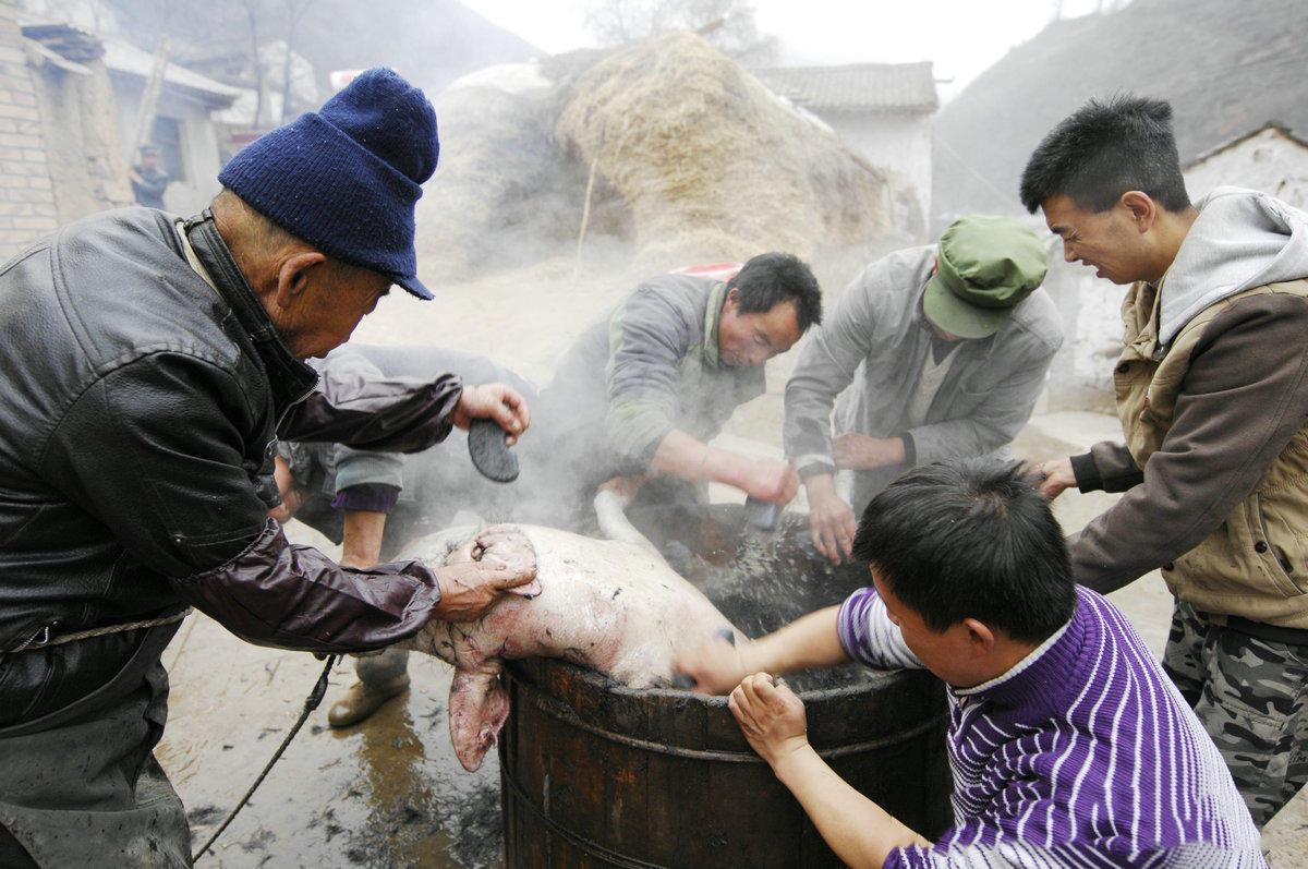 闲着的农民们都过来帮忙,退猪毛用的是一种有很多孔洞的烧结块,老叔拿的退毛石是村里老铁匠帮忙加工的,退猪毛效果很好,连根拔除。
