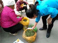 河南农村遍地都是的面条菜 城里卖到10块一斤