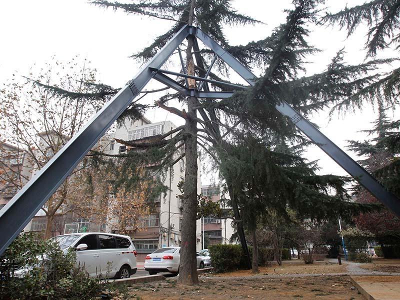 """2016年12月12日,河南省郑州市建设路一小区内,一棵受伤雪松被人用钢铁打造""""护甲""""套在周围。小区内,这棵直径约50厘米的雪松周围,被3根宽大的""""H""""型钢柱支撑,树干约10米处,裂开的主干被特制的""""环形钢""""包裹着,乍一看去,整棵大树好似套上了一层钢铁铠甲"""