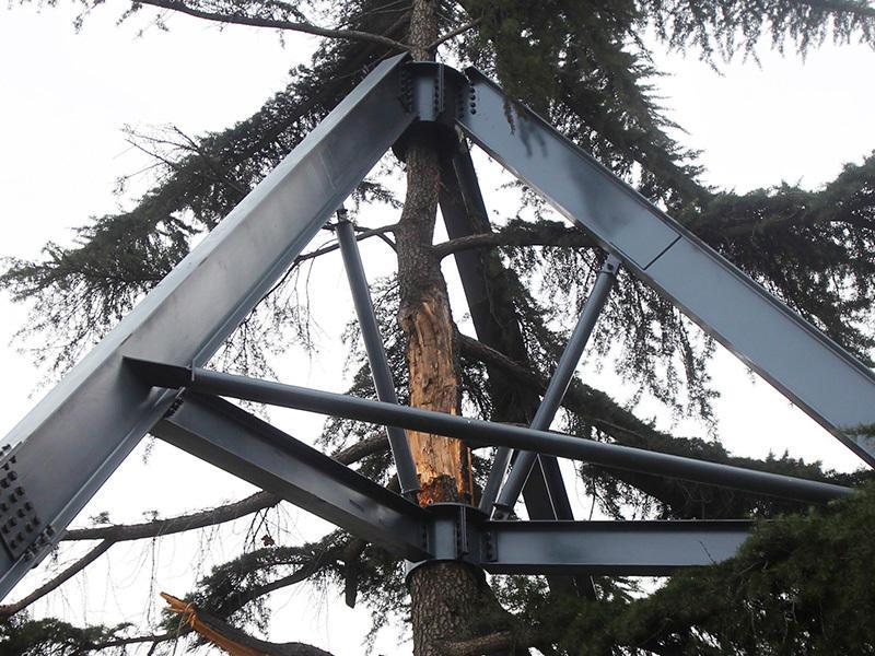 """这下,树可结实了,估计台风来了也刮不倒它!""""据建设路一名巡防队员称,""""这棵大雪松,上个月被一场突如其来的大雪压断了不少枝干,整棵大树向一边倾斜,为了拯救树木和防止树倒伤人,这才被人用宽大的钢架保护起来。"""""""