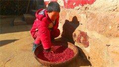 河南孤儿挖草药换钱 只为换500元求学