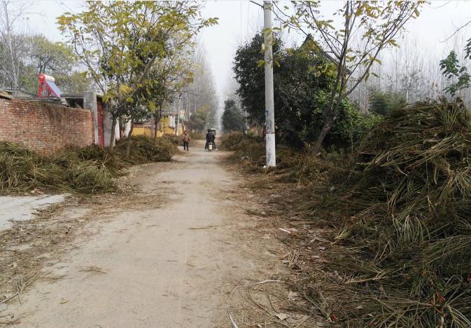 然而这样东西据说对冻疮很有效,冬天城里人遍寻不着,农村却扔的到处都是。如果不能好好清理干净,还要受批评。