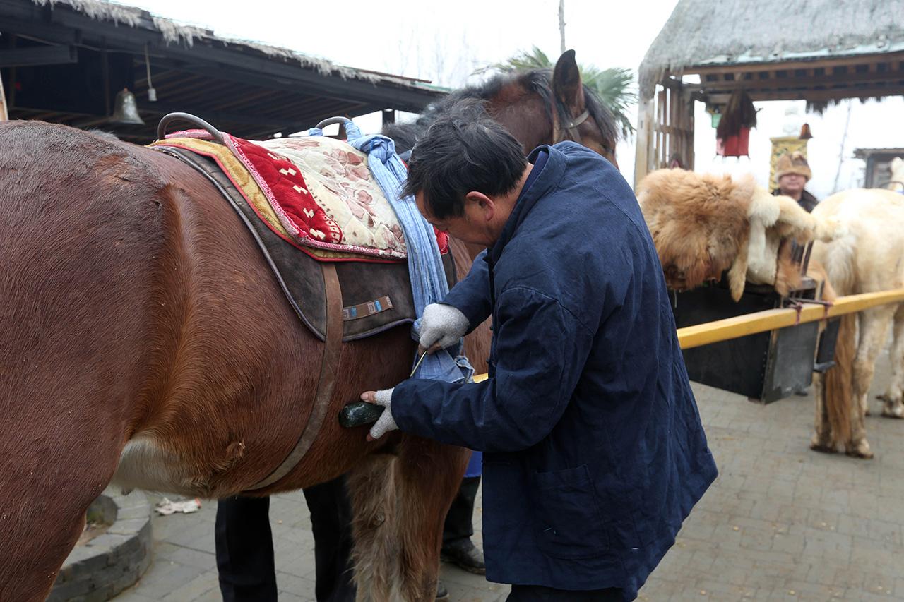 河南有个57岁的农民郭老汉,这几年他自己养了两匹马,两匹马都很温顺,没事的时候他突发奇想让马抬轿子,他自己制作了工具,经过不断的实验终于成功 。