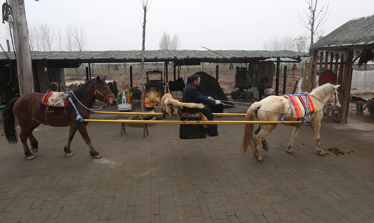 郭老汉坐着制作好的轿子从院子里出发,温顺的马儿连步调都是一致的。