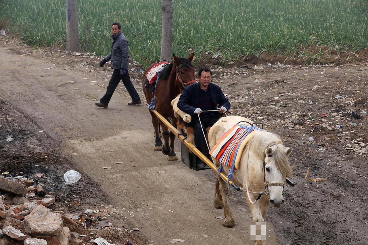 路过田地,马儿也十分听话,不紧不慢地走着。