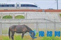 郑徐高铁正式开通运营 标志中国高铁正式成网