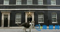 """英国首相府换主人 """"第一猫""""继续留任(图)"""