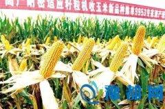 河南农大玉米新品种创纪录 亩产2200斤达平常两倍